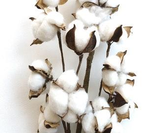 "30"" Cotton Stems, Cotton Balls, Branches, Bunch, Wedding, Rustic, Country, DIY, Flowers, Floral Arrangement, 2nd Anniversary, Farmhouse"