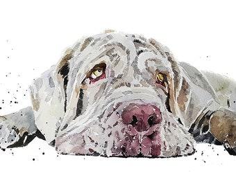 Neapolitan Mastiff Flat out-  Watercolour Print (30*40cm / 16*12inches)