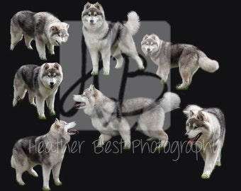 wolf husky photoshop overlay INSTANT DOWNLOAD