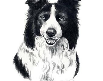 BORDER COLLIE Dog Art Print Signed by Artist DJ Rogers