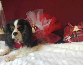 Christmas dog dress
