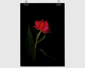 Black Background Art, Flower Posters, Black Background, Botanical Print, Tulip Print, Digital Photography, Wall Art, Black Background Floral