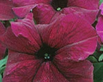 50 Pelleted Supercascade Burgundy Petunia Seeds
