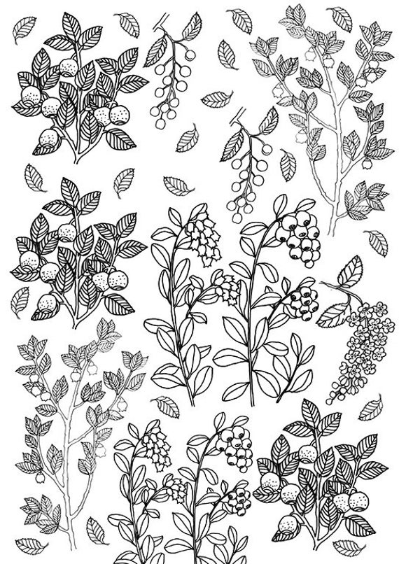 Berries And Leaves, Coloring Sheet, Printable Berries, Instant Download,  Color Page Summer, Garden Coloring, Adult Color Page, Colour Book From ...