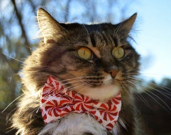 Cat bow tie for Christmas, Christmas cat collar, Christmas cat bow tie, cat collar, Christmas cat costume, kitten bow tie for Christmas