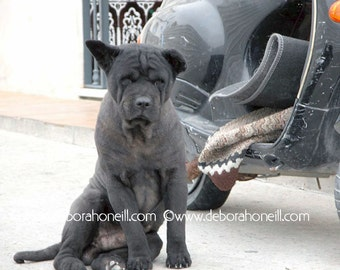 """Funny Animal Photography """"Motorcycle Dog, Spain"""""""