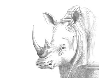Animal Prints, Illustration, Baby Nursery, Decor Wall Art, Nursery Art Print, Rhino Sketch