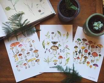 Flora & Toadstool A5 Illustration Print Pack