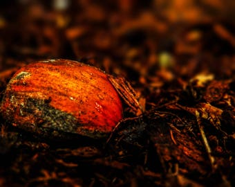 """16x20"""" Forest Floor Nature Photography Print on Acrylic Canvas"""