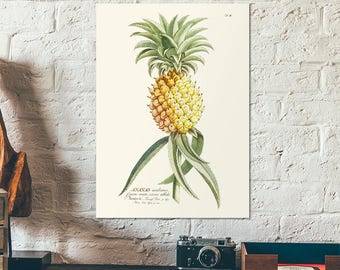 Vintage Botanical Herbal Ananas illustration - Educational chart diagram - Old plant poster