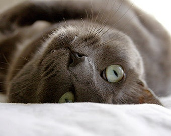 Gray Cat Photo Photo Notecard Set