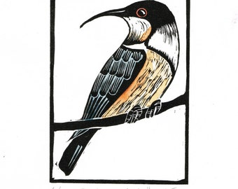 Linocut of an Eastern Spinebill with Hand Painted Colour, Australian Bird Print, Printmaking, Lino Print