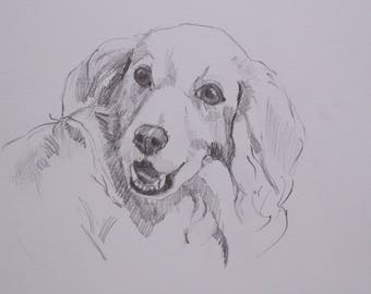 golden retriever drawing , daily sketch , golden retriever , sketch , gift ,birthday , dog lover , pencil drawing , graphite , dog art