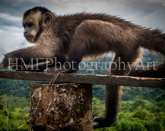 Amazon Monkey Photography (Digital Download)