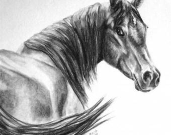 "8x10"" custom pencil portrait of your pet"