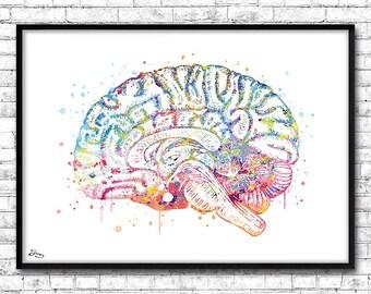 Brain watercolor, medical art, decoration, doctor, surgeon, neurosurgeon poster, Anatomy illustration [356] gift
