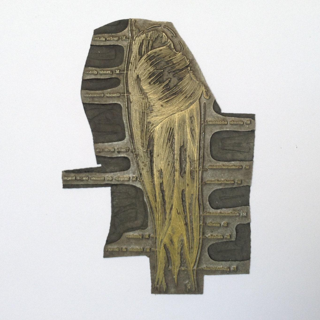 Cliché o matriz de Vintage imprimir anatomía pierna muslo
