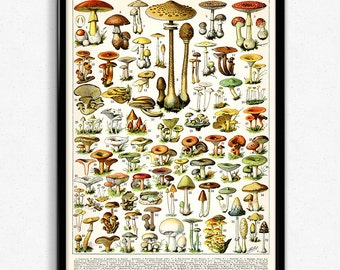 Mushroom Illustration Vintage Print 1 - Mushroom Poster - Mushroom Art - Home Decor - Home Art - Kitchen Art - Botanical - Larousse (VP1015)