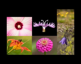 Set of Photo Greeting Cards Flowers Nature Photography