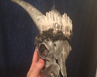 Real goat skull with lemurian seed quartz, mica and coal.