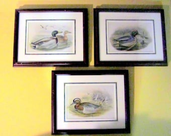 REDUCED - Duck Lithographs by Gould