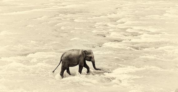 RIVER ELEPHANTS 5. Elephant print, Sri Lanka, Giclee Print, Limited Edition Print, Wildlife Photography