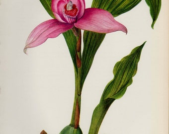 Antique ORCHID Print Botanical Print Pink Gallery Wall Art Cottage Decor Shabby Chic Decor House Warming Gift For Birthday Mom Dad 3001