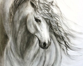Charcoal horse drawing of 'Equine Sublime' giclee print on canvas or paper