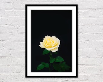 Yellow Rose Print, Botanical Printable, Yellow Wall Art, Flower Print, Minimalist Art, Yellow and Black Art, Flower Photography, Download
