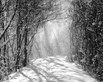 Nature Photography: Black and White Snow Trail in Michigan PRINT