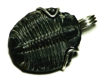 Trilobite Pendant, Fossilized Trilobite Necklace Silver, Utah Trilobite Jewelry, Sterling Fossil Jewelry, Cool Fossil Necklace, Fossil Charm
