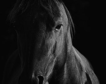 "Horse Photograph - Black and White Horse Photography Print - Equine Art Print  - ""The Sage"""
