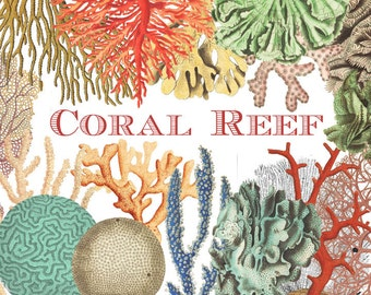 Coral Clipart, Vintage Coral Digital Graphics