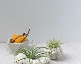 duo of sea urchin air plant holders // desk accessory // cute gift // wedding favor // air plant // sea urchin plant