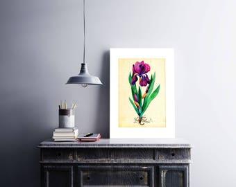 Purple Iris, Floral Poster, Iris Art Print, Watercolor Iris, Purple Iris Art Print, Iris Poster, Iris Art, Botanical Art, Iris Home Decor