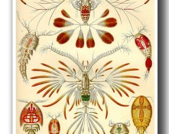 Ernst Haeckel Scientific Illustration, Copepoda Print, Marine Life Poster, Natural History Art Print, Crustaceans Print, Educational Art