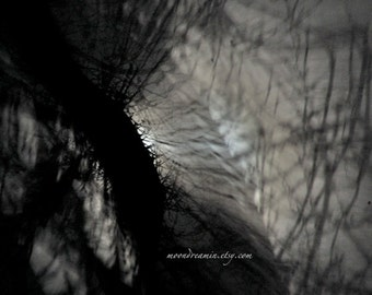 Abstract Moon print, Dreamscape no10 spooky tree, haunting shadows, surreal moonlight, dreamy Night Sky, monochrome sky print, moonscape,