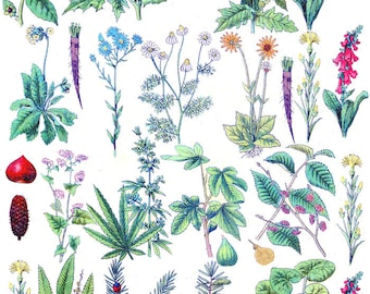 Wildflowers - Ceramic Decals- Enamel Decal - Fusible Decal - Glass Fusing Decal ~ Waterslide Decal - 92868