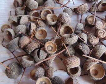 100  Natural Acorn Caps, Pure Natural Acorn Caps, Nature Decor, Fall Decor, Fall Crafts,Real Acorn Caps, Rustic Decor, Thanksgiving Craft