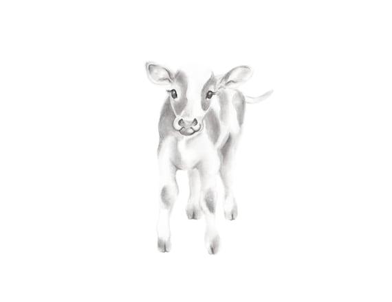 Calf Pencil Drawing