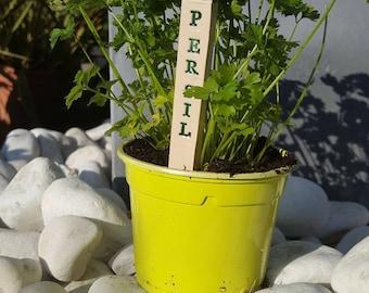 BRAND plant parsley ceramic