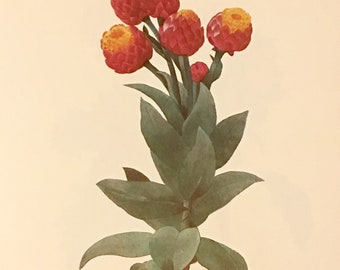 Flora Everlasting