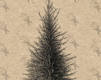 Image Tree Pine Spruce Instant Download picture Digital printable vintage clipart graphic Stickers Burlap Fabric Transfer Iron On  HQ 300dpi