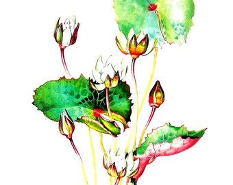 Exotic Flower Print  - Rudge's Waterlily - Margaret Mee 1989 Vintage Book Page 11 x 9