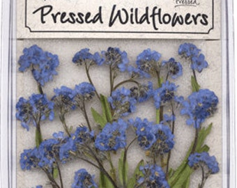 Forget-Me-Nots - 20 piece pack