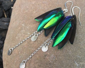 Jewel Beetle Wings, Real Beetle Earrings, Taxidermy, Electra Insect Jewelry, Long Silver Earring, Unique Insect Wings, Metallic Green #BW012