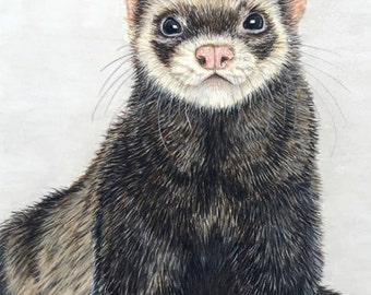 Ferret Portrait: Numbered Print