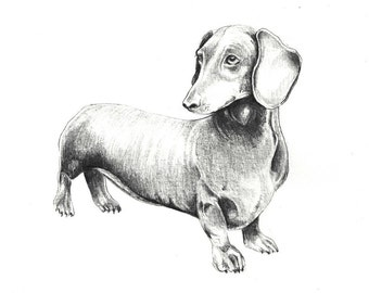 "Wiener Dog art print of an original drawing available 5x7"" or 8x10"""