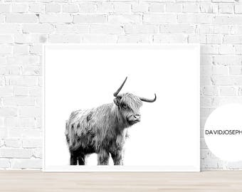 Highland Cow Print, Scottish Cow Print, Highland Cow Poster, Animal Photography, Black And White, Digital Download, Minimalist Print