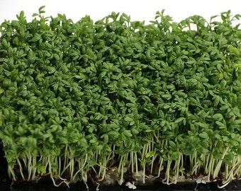 Curly Cress SEEDS -  o.p./ Heirloom Seeds